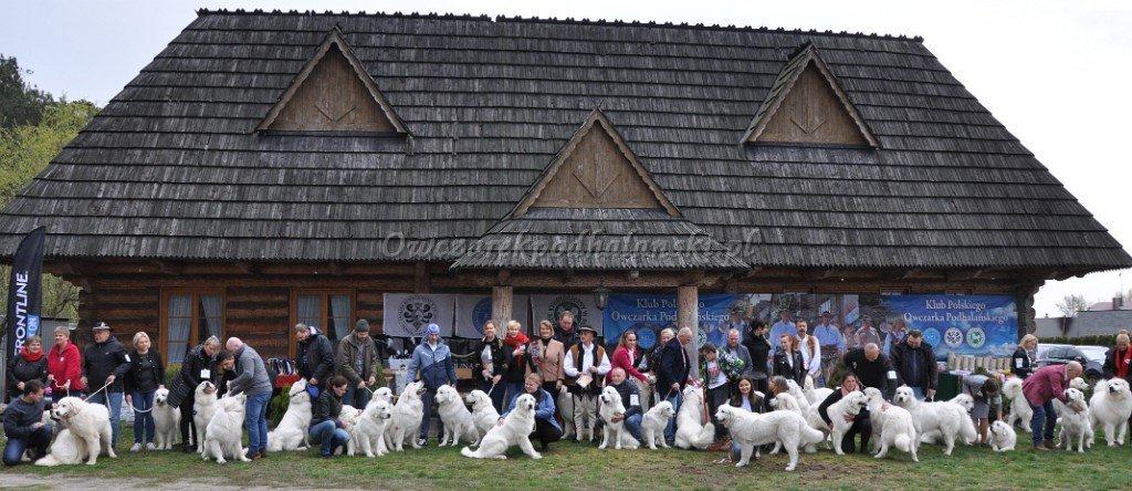 Owczarki Podhalańskie na wystawie klubowej w Kępnie